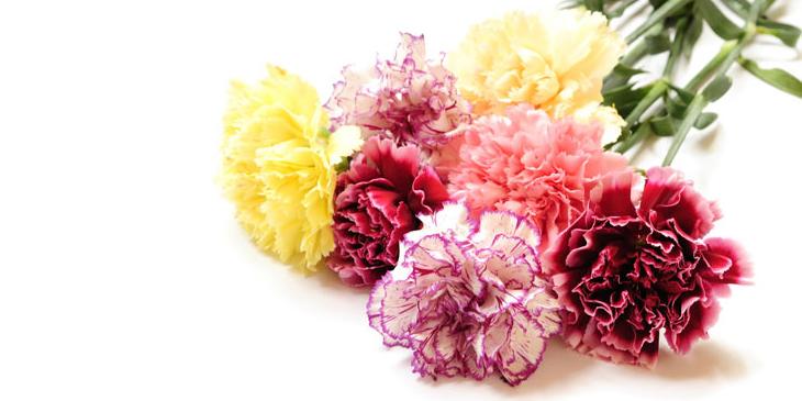 ดอกไม้ประจำวันเกิด-feature
