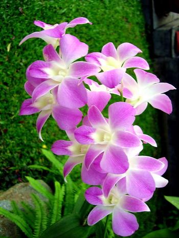 ดอกไม้ประจำวันเกิด