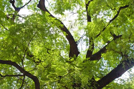 ต้นไม้มงคล