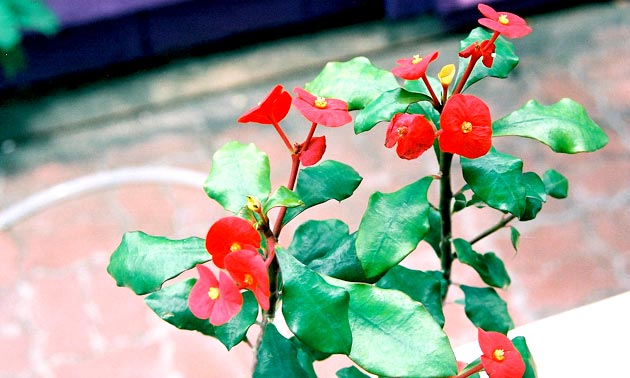 ดอกไม้มงคล