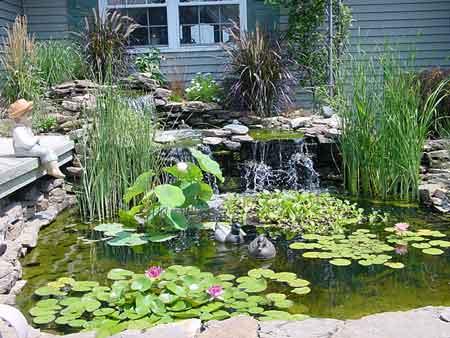 สวนไม้น้ำ