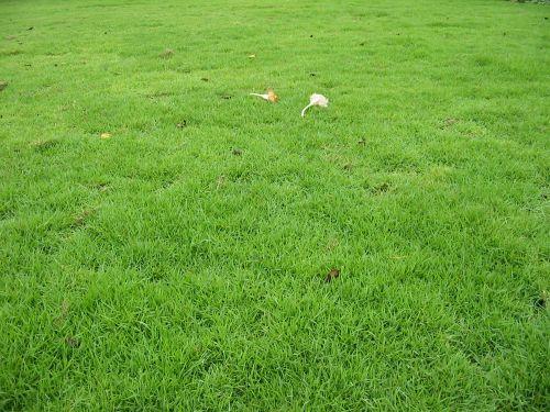 สนามหญ้า
