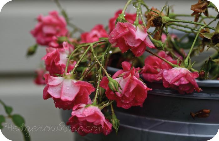 ดอกไม้หน้าฝน