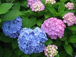 ดอกไม้หน้าฝน2