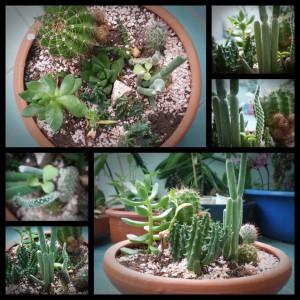 สวน Cactus1