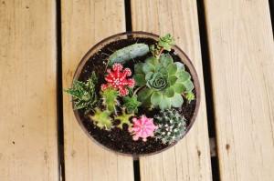 สวน Cactus10