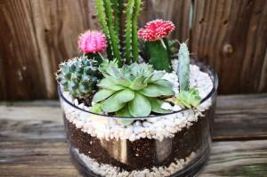 สวน Cactus12