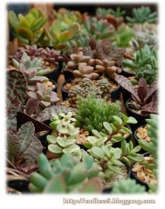 สวน Cactus2