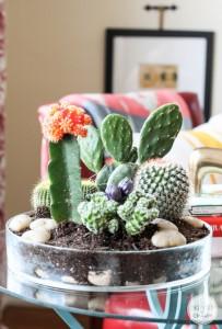 สวน Cactus22