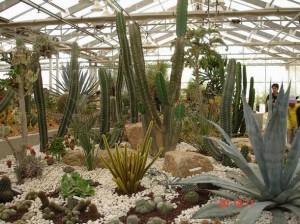 สวน Cactus3