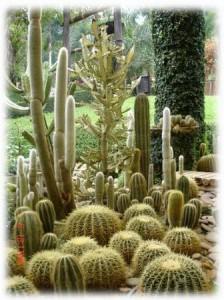 สวน Cactus4