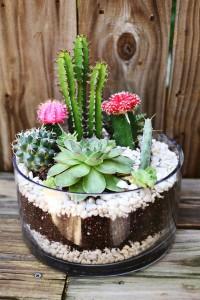 สวน Cactus5