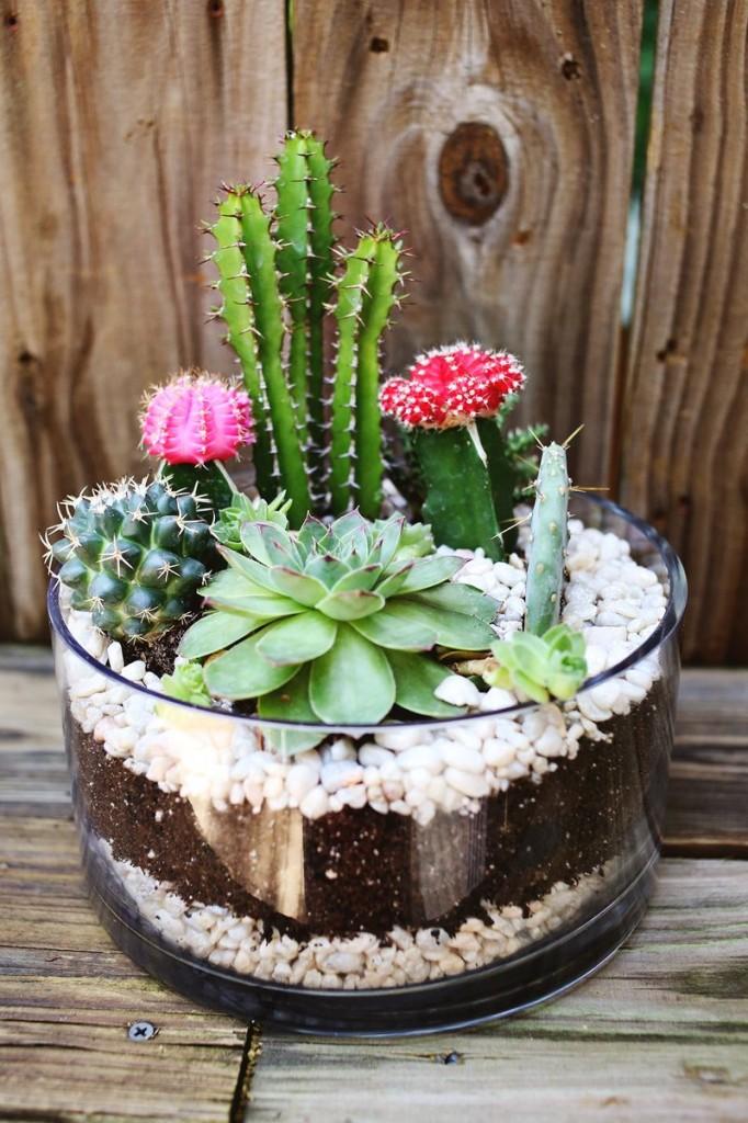สวน Cactus
