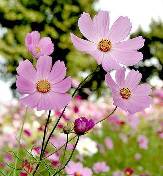 ไม้ดอกไม้ประดับ